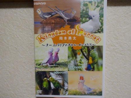 野生のインコの写真家・岡本勇太氏が製作したDVD「Kingdom of Parrot」のパッケージ