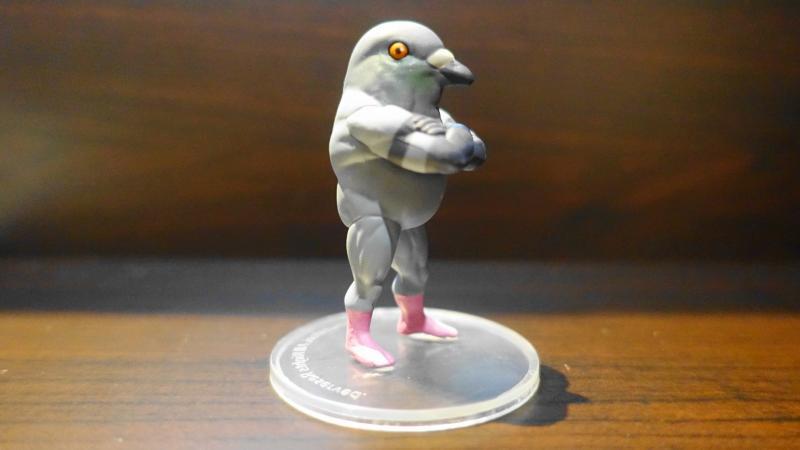 ガチムチ鳥3のハトの横顔、鋭い目が特徴的