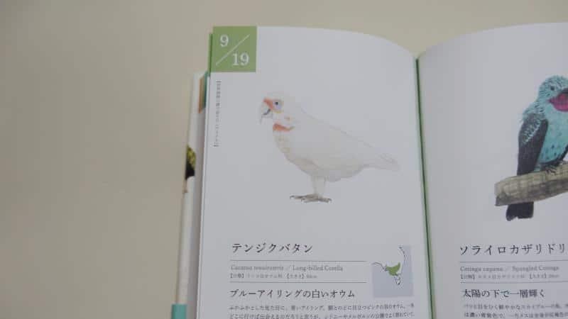 「366日の誕生鳥辞典」の9月19日はテンジクバタンが誕生鳥