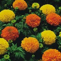 Marigolds - not actually what this post is about but lovely nonetheless.