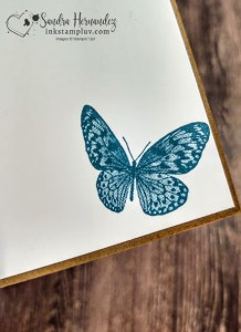 Butterfly on inside of card