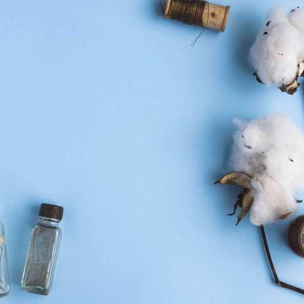 brotes de algodón sobre fondo azul