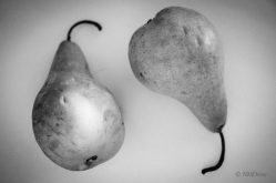 Pears (7 of 12)