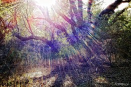 Into the Morning Sun