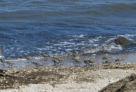 2015 WATER QUALITY REPORTS
