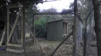 chicken-coop-shelter-finished