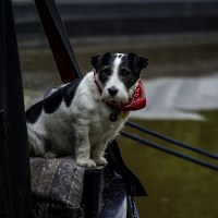 Narrowboat Dog #2.