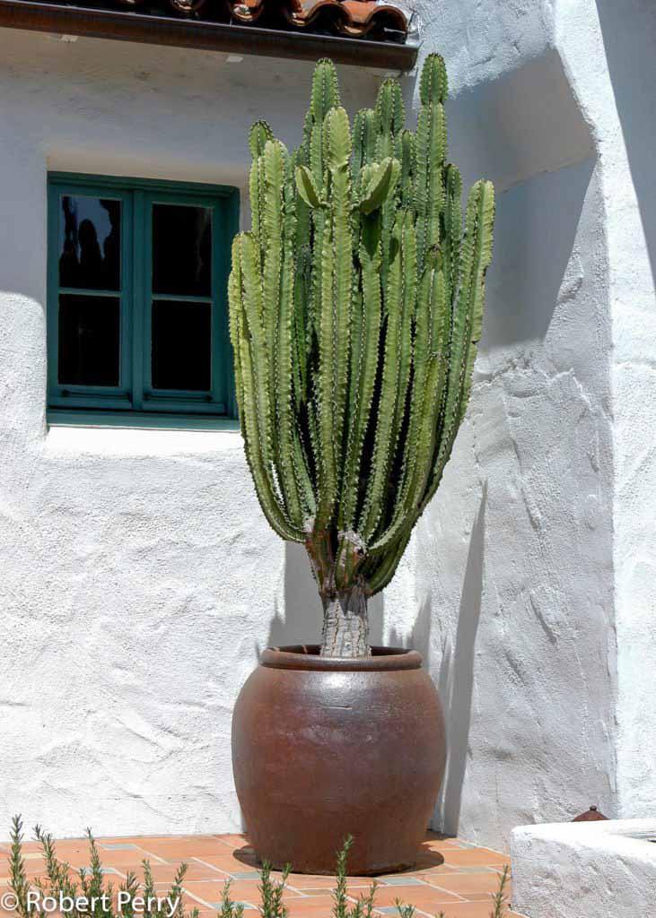Water Garden Plants Shade