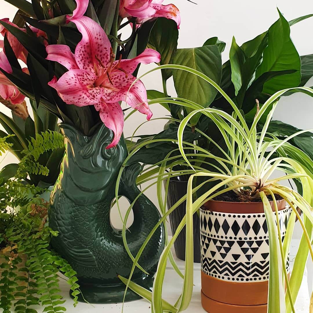 🌿🌺Get tropical this autumn – create your own jungle