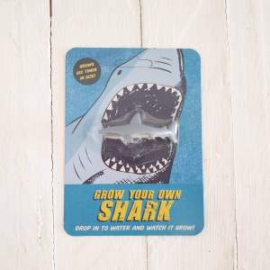 Grow Your Own Shark by Rex of London