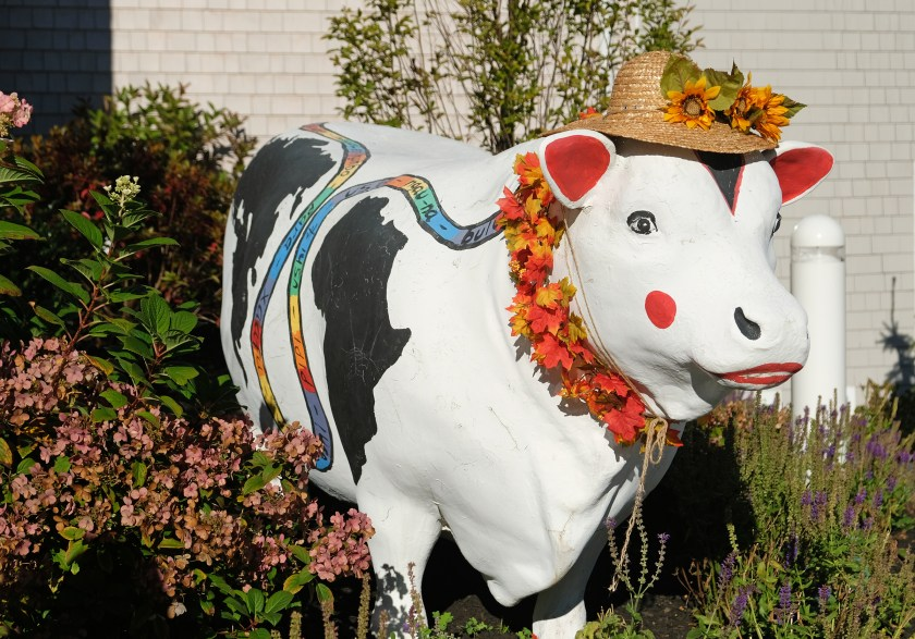 An Inly cow decorated for fall