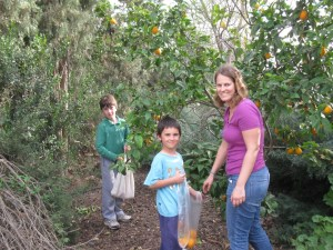 """Picking oranges with """"the kids"""""""