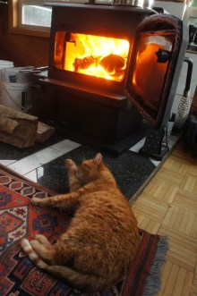 Shadow the cat, never too far from the fireplace