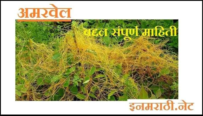 amarvel-information-in-marathi