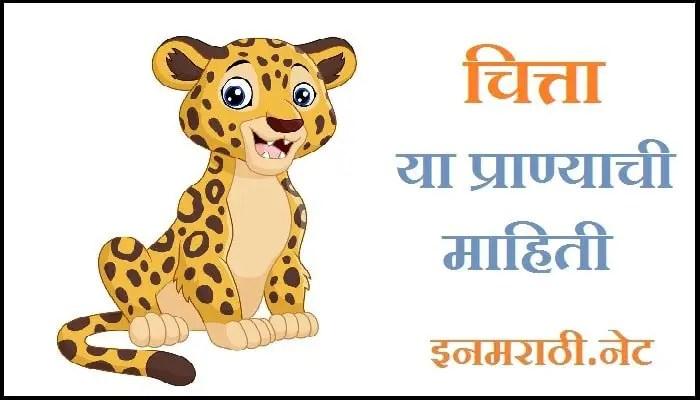 cheetah-information-in-marathi