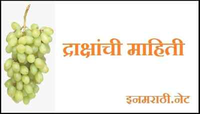 grapes-information-in-marathi