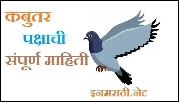pigeon-information-in-marathi