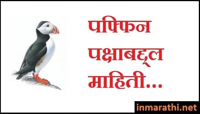 puffin-information-in-marathi