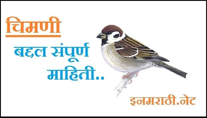 sparrow-information-in-marathi
