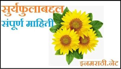 sunflower-information-in-marathi