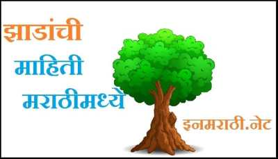 tree-information-in-marathi