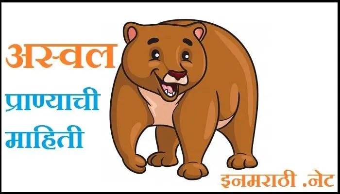bear-information-in-marathi