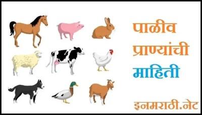 domestic-animals-information-in-marathi