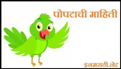 parrot information in marathi