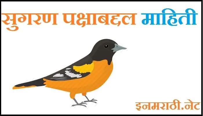 sugran bird information in marathi