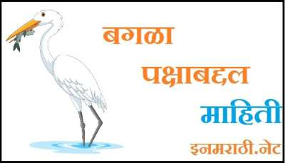 bagla bird information in marathi