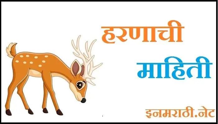 deer information in marathi