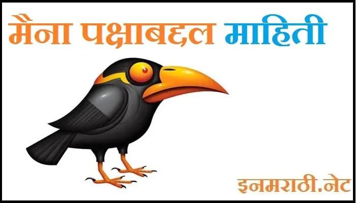 myna bird information in marathi