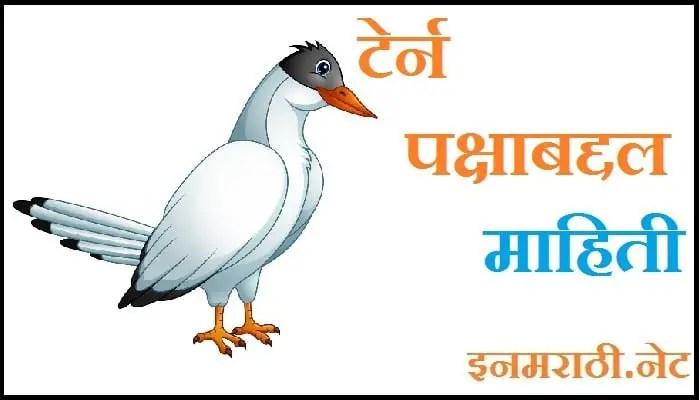 tern bird information in marathi