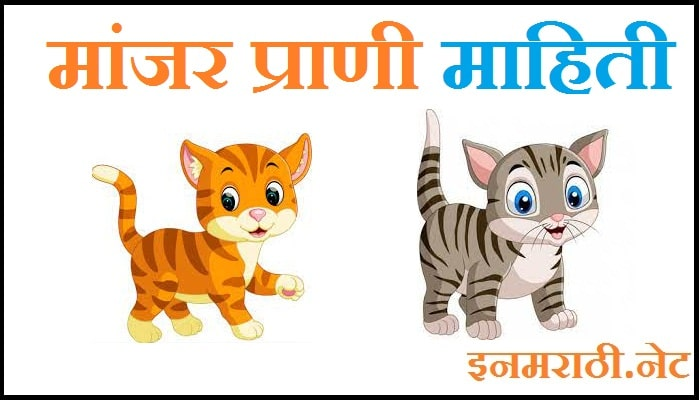 Cat information in Marathi