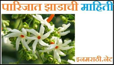 parijat tree information in marathi