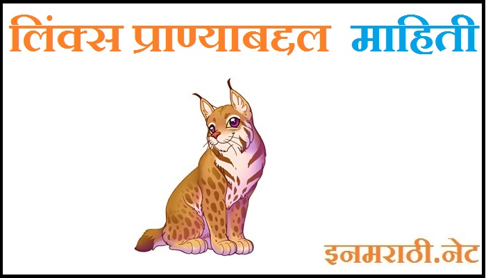 lynx animal information in marathi