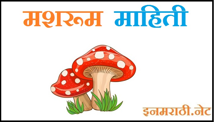 mushroom information in marathi