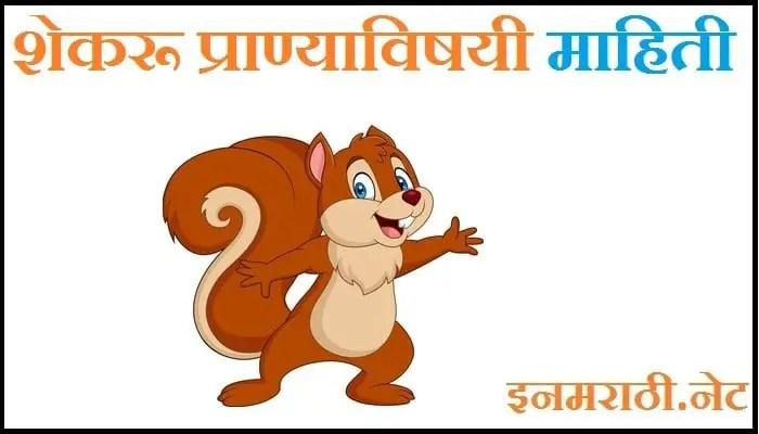 squirrel information in marathi