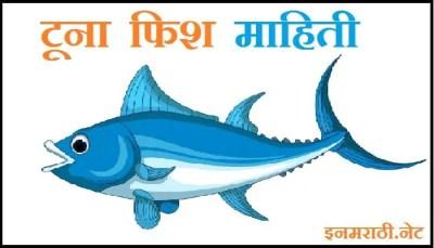 tuna fish in marathi