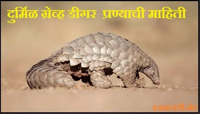 rare grave digger animal information in marathi