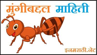 ant information in marathi