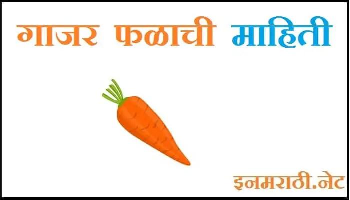 carrot information in marathi