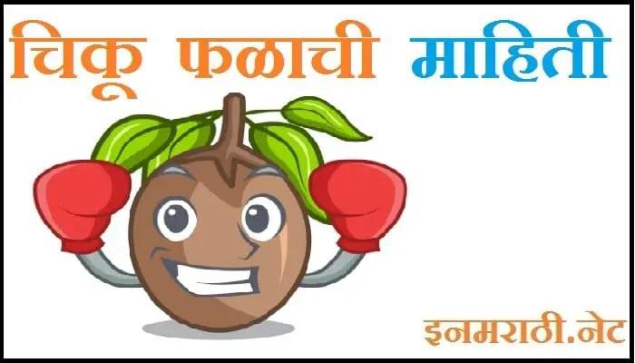 chikoo fruit information in marathi