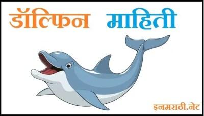 dolphin information in marathi