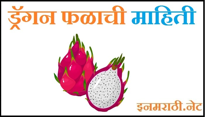 dragon fruit information in marathi