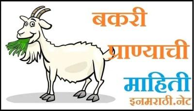goat information in marathi