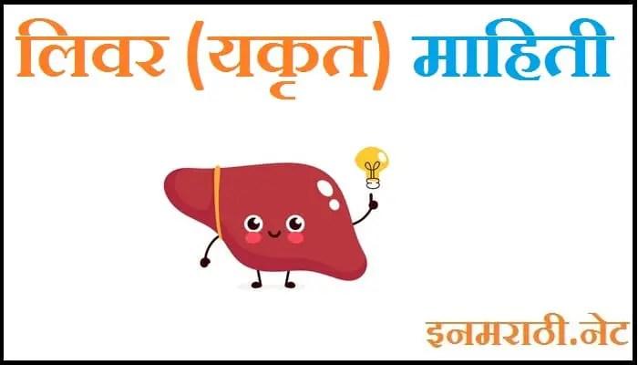 liver information in marathi