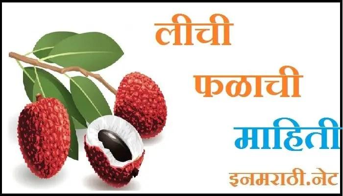lychee fruit information in marathi