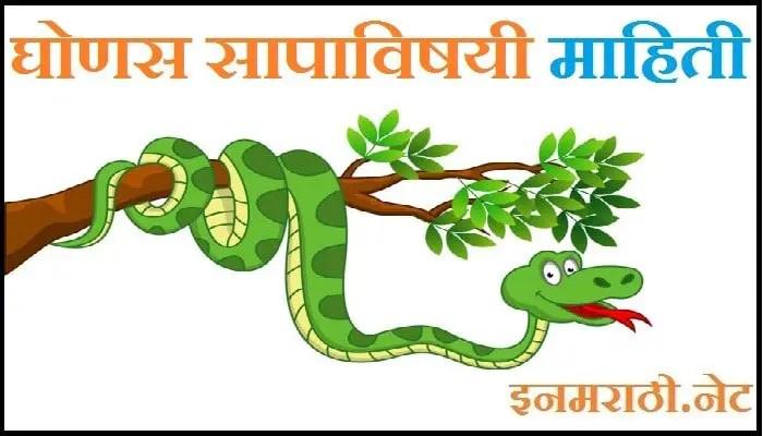 ghonas snake information in marathi