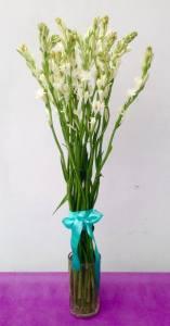турберезы цветы бали